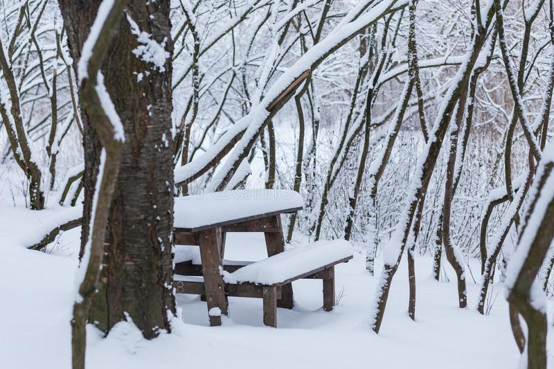 Winter forest landscape with snow stock photos