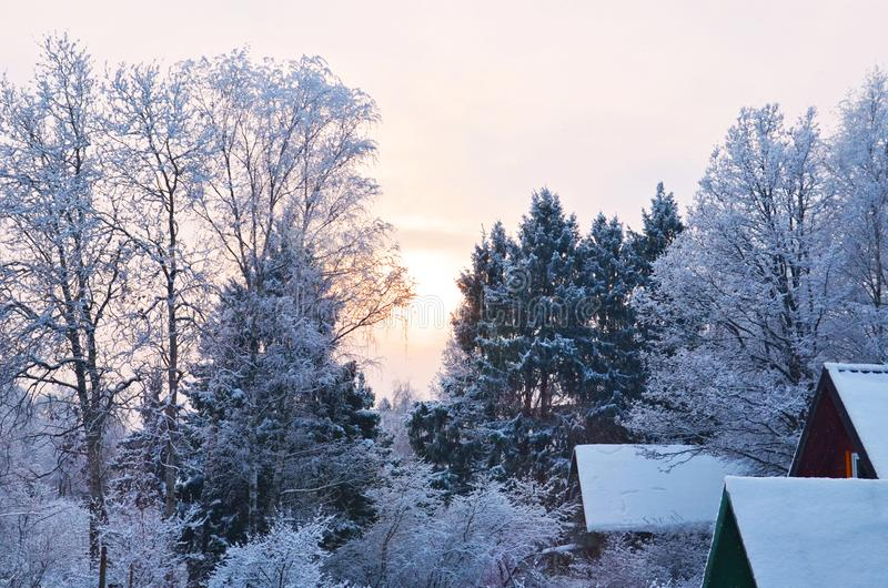 Winter forest landscape2 stock images