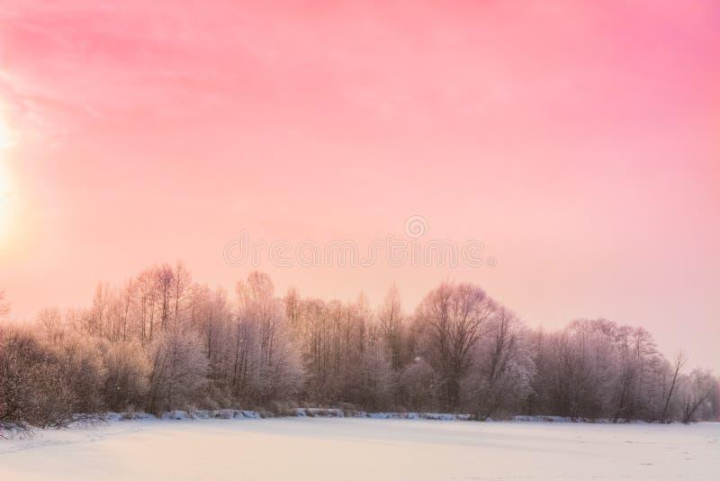 Download Winter forest landscape stock image. Image of blue, tree - 32066661