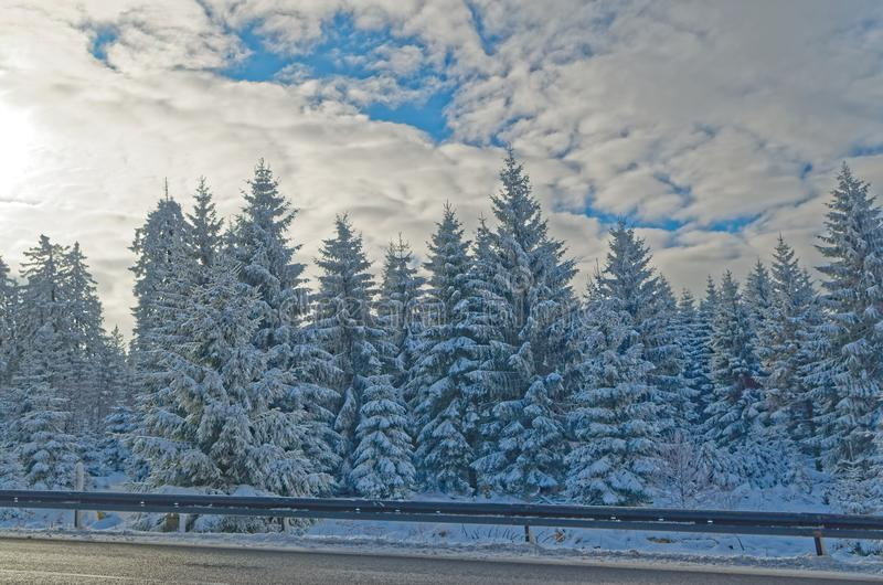 Winter forest landscape on sunny day in Harz mountains national park. Germany royalty free stock photo