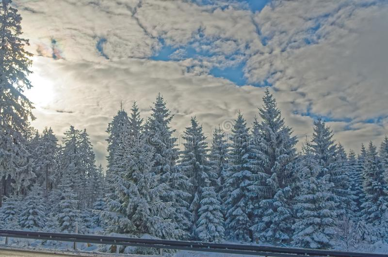 Winter forest landscape on sunny day in Harz mountains. National park, Germany stock photos
