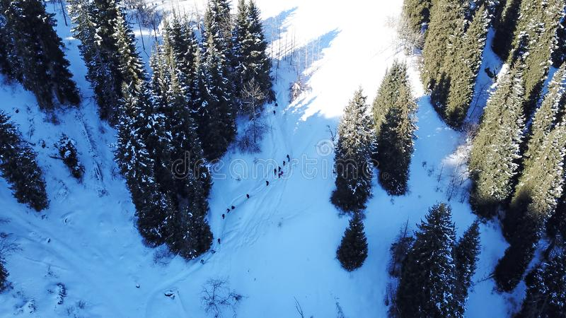 Winter forest and mountains. A group of tourists walking along the trail. The view from the top. royalty free stock photos