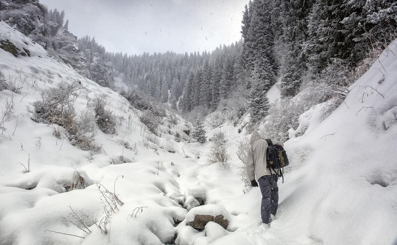 Winter forest in the mountains. stock photo