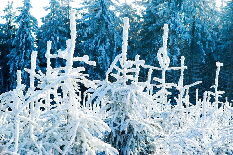 Winter forest nature stock image