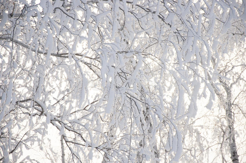 Winter forest nature snowy landscape outdoor background. Landscape snow trees dense forest in winter stock photo
