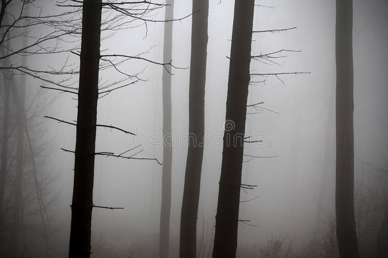 Winter forest, no snow, foggy background, leftover leaves on branches and ground. Orange and yellow tint royalty free stock photography