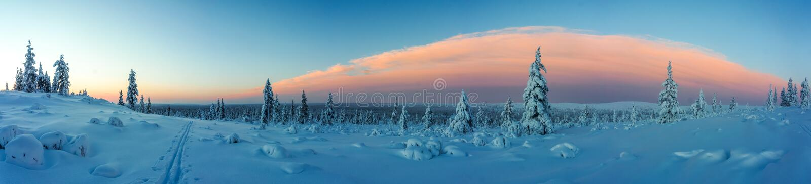 Winter forest in northern Finland royalty free stock images