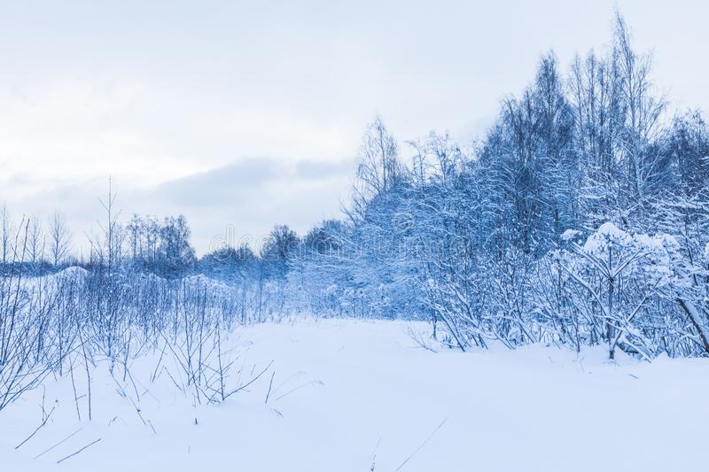 The winter forest or park in the cloudy cold weather. The beautiful white snowy fairy landscape of cold frost north nature. With the trees, bushes and old grass royalty free stock images