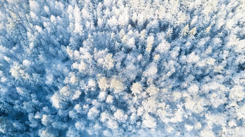 Winter forest patterns. Winter forest covered with snow aerial drone view. Winter forest background. Christmas background. stock photos