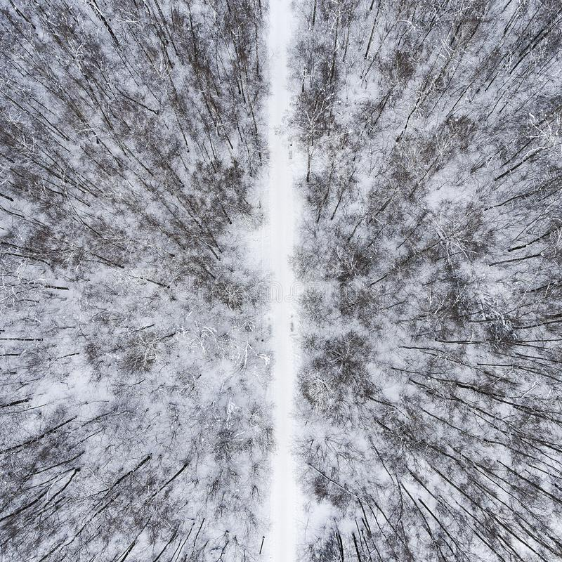 Winter forest removed from the drone. Black and white landscape stock image