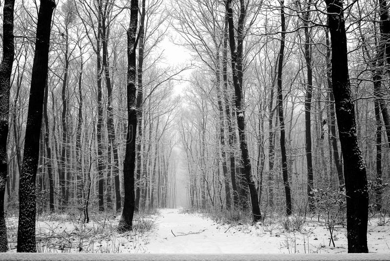 Winter_forest_road06 lizenzfreie stockfotografie