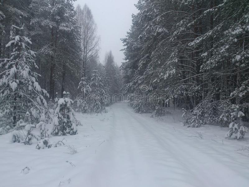 Winter forest road stock photos