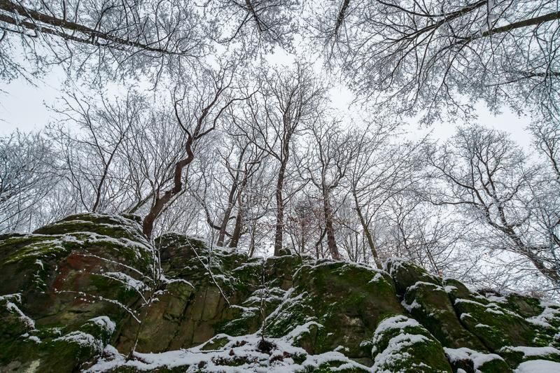 winter forest on a rocky cliff. royalty free stock image