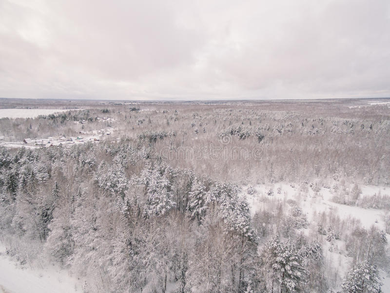 Winter forest. Russia, Moscow suburbs royalty free stock photography