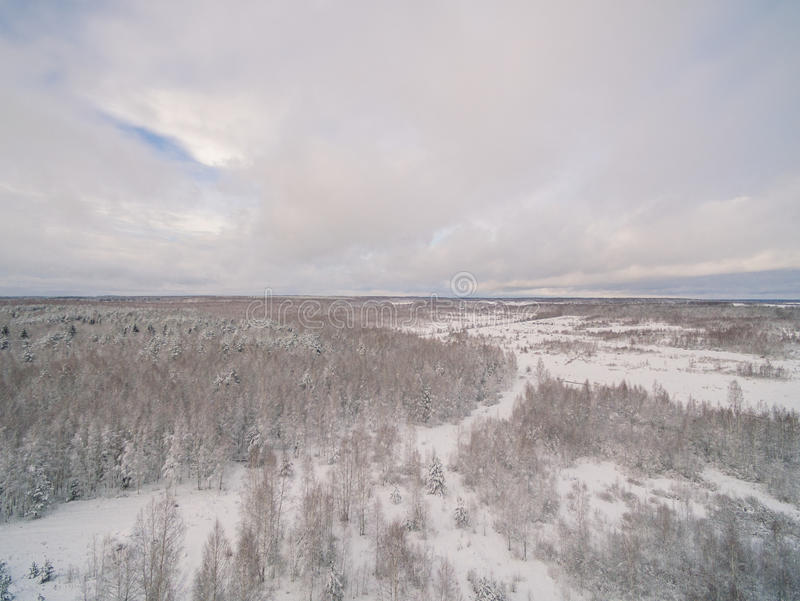 Winter forest. Russia, Moscow suburbs royalty free stock image
