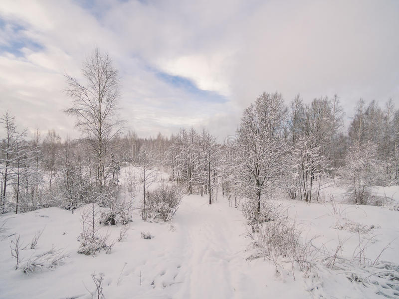 Winter forest. Russia, Moscow suburbs stock photography