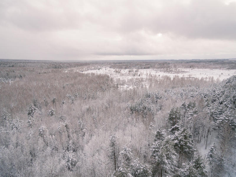 Download Winter forest stock photo. Image of beauty, frost, scenic - 83843764