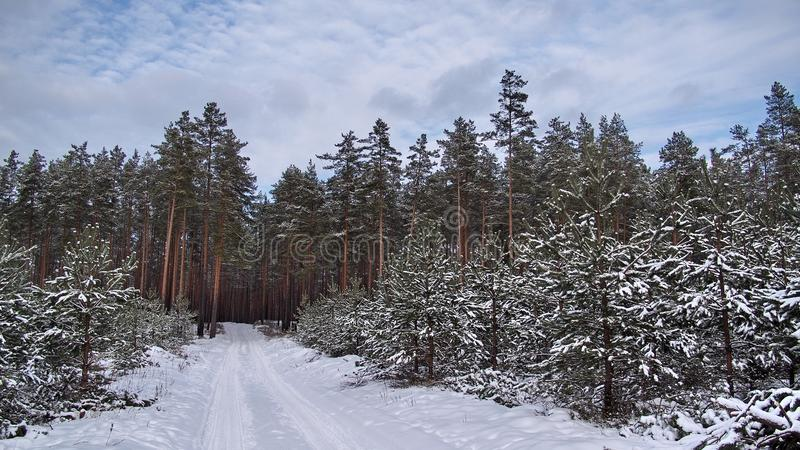 Winter fores and sky landscape royalty free stock images