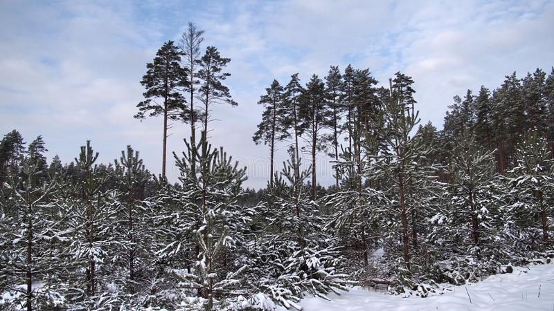 Winter fores and sky landscape stock photography