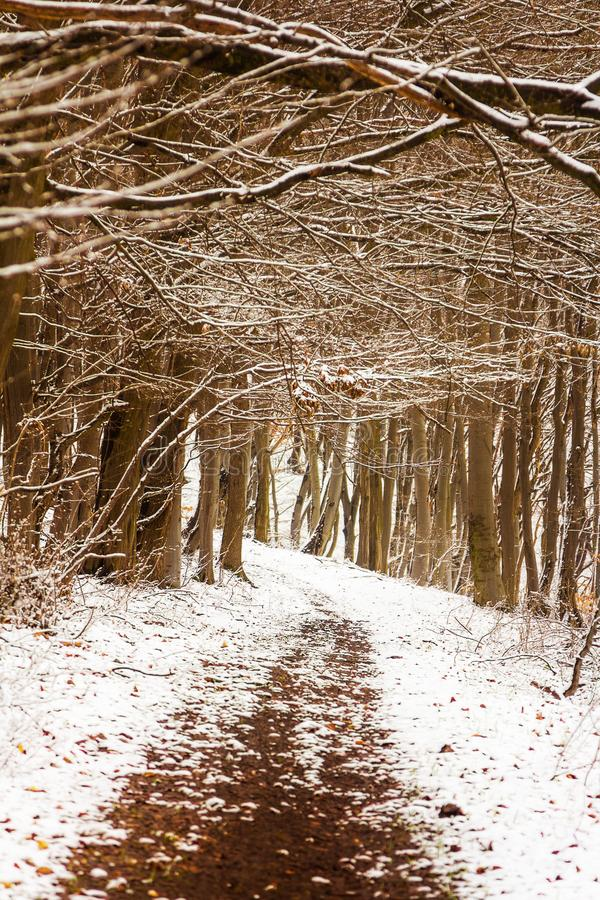 Winter forest. And snow in a cloudy foggy day photo stock photo