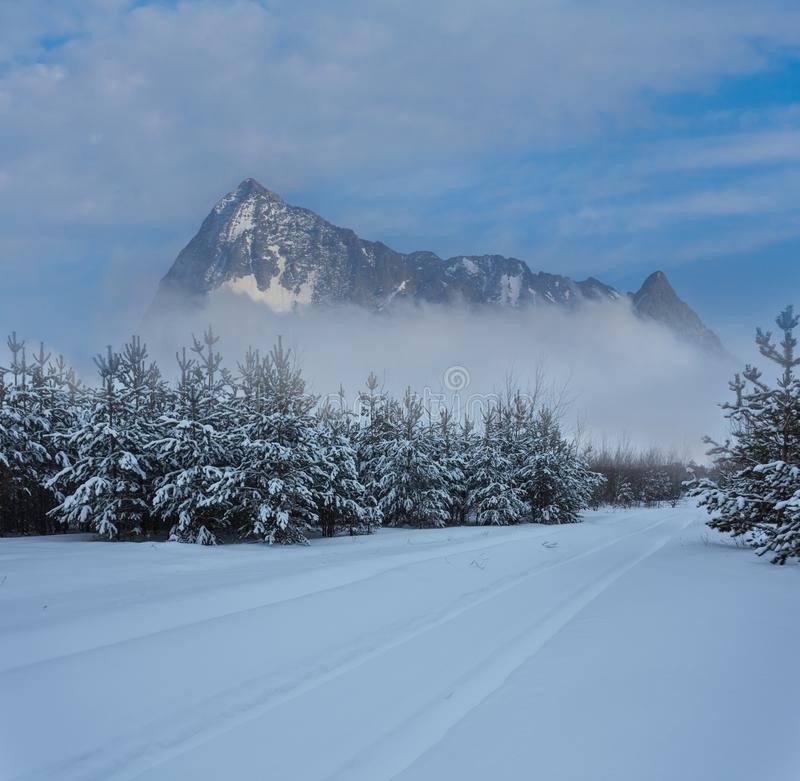 Winter forest in a snow and mountain ridge beyond stock images