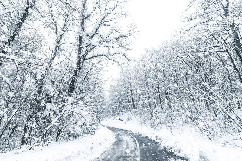 Winter forest snow road. Forest road winter snow view. Winter forest stock photography