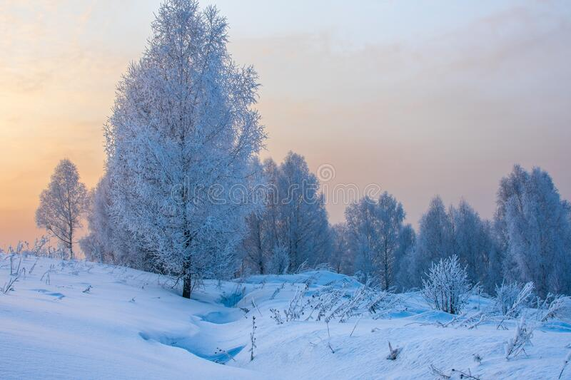 Winter forest in the snow at sunset. N stock photo