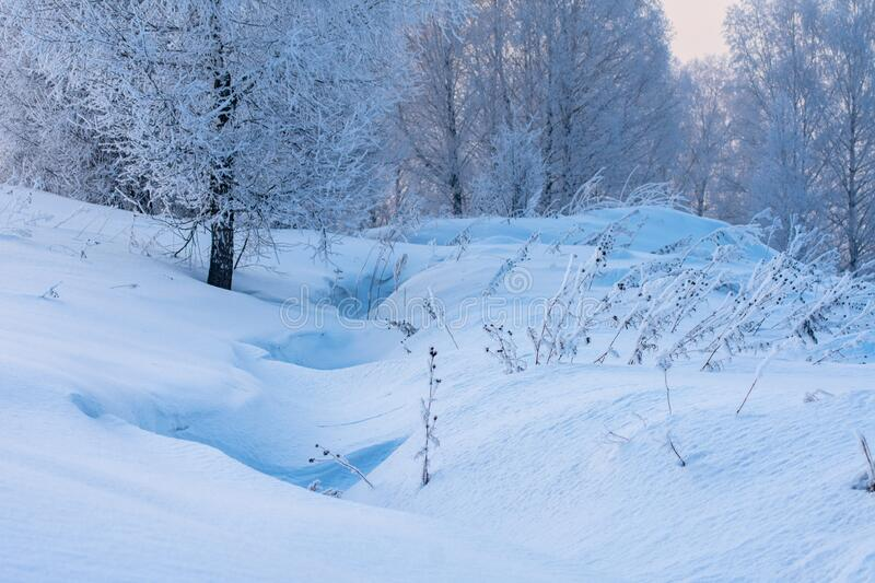 Winter forest in the snow at sunset. Winter forest in the snow royalty free stock photos