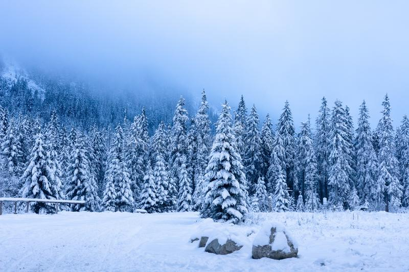 Winter forest in snowy mountains. Scenic frosty nature. Christmas trees covered by snow in mountain valley stock images
