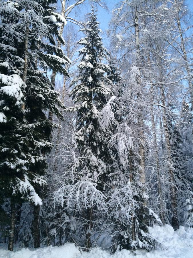 Winter forest in St Petersburg stock photography