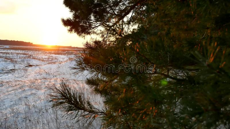 Winter and forest sun landscape. christmas sunlight tree beautiful sun winter forest snow a glare. Winter and forest sun landscape. christmas sunlight tree stock photos