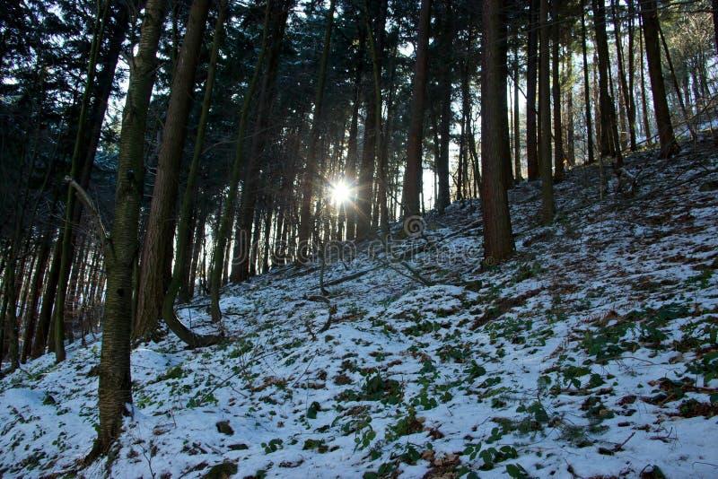 Winter Forest Sun Rays stockbilder