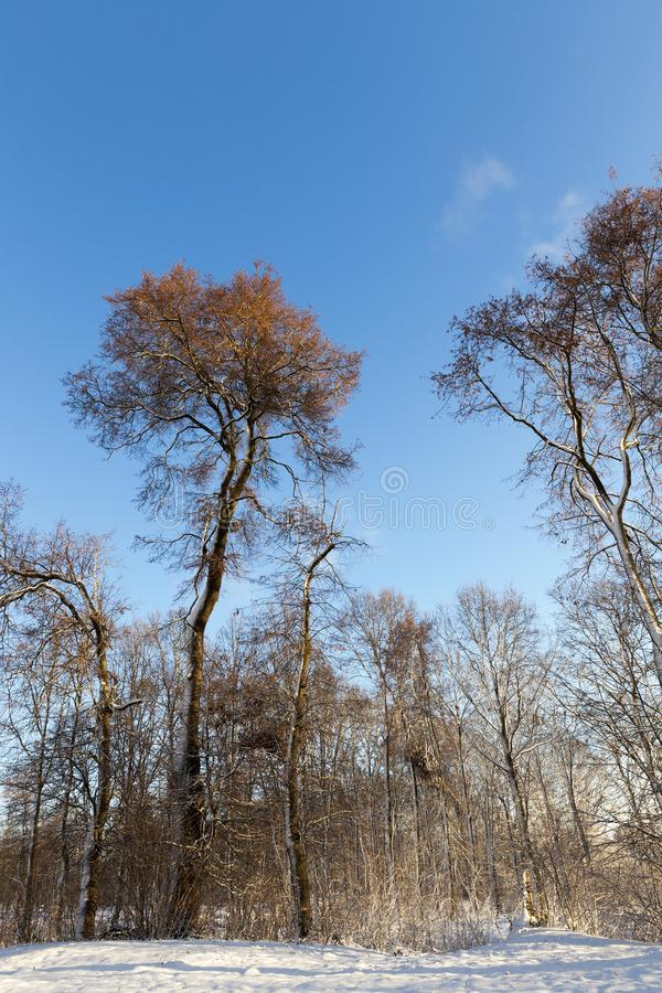 Winter forest, sunny weather stock images