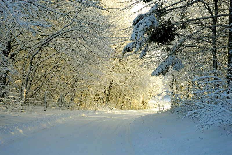 Winter forest sunset royalty free stock image