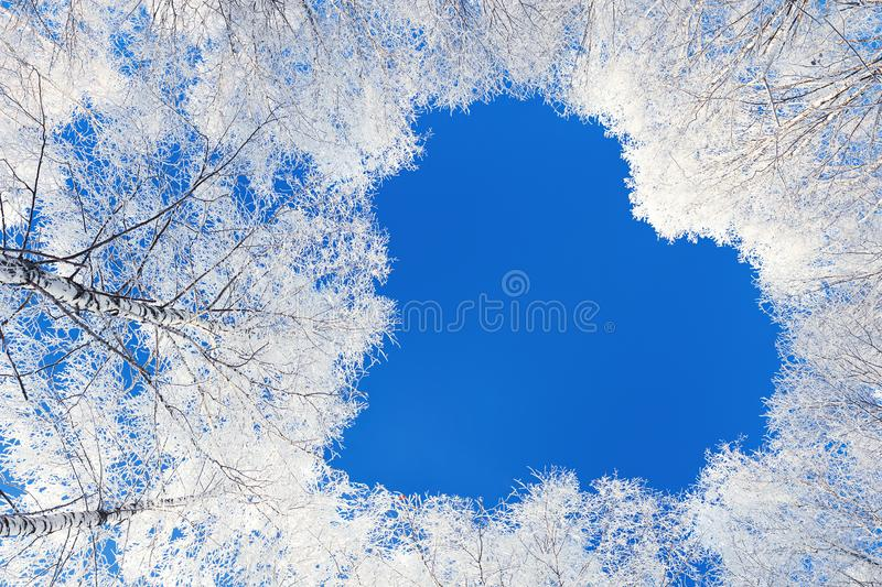 Beautiful winter landscape with forest and blue sky. Winter forest trees are covered with snow. shape heart of branches tree on blue sky background. beautiful stock photo