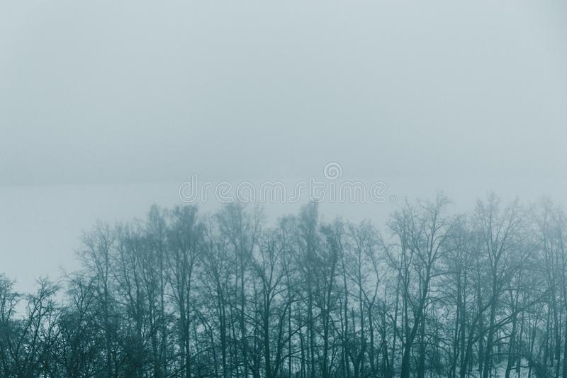 Winter forest trees in fog, snow nature landscape with mist as winter background for design with copy space royalty free stock images