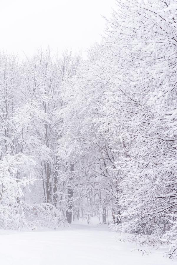 Winter forest. Trees in the snow. Snowy and cold weather. royalty free stock photos