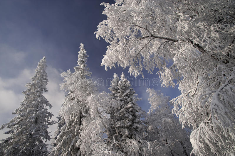 Winter forest in the Ural Mountains. Winter forest in National Park Taganay, Ural Mountains, Russia royalty free stock image
