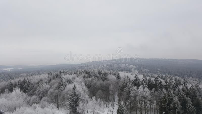 Winter forest view stock images