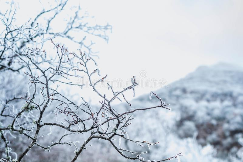 Winter forest. In the snow, background, christmas, tree, landscape, nature, pine, scene, cold, white, blue, frost, snowy, beauty, season, january, year, sky stock image