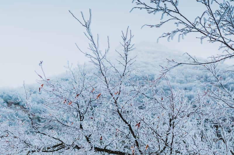 Winter forest. In the snow, background, christmas, tree, landscape, nature, pine, scene, cold, white, blue, frost, snowy, beauty, season, january, year, sky stock images