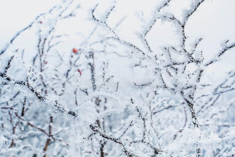 Winter forest. In the snow, background, christmas, tree, landscape, nature, pine, scene, cold, white, blue, frost, snowy, beauty, season, january, year, sky royalty free stock photos