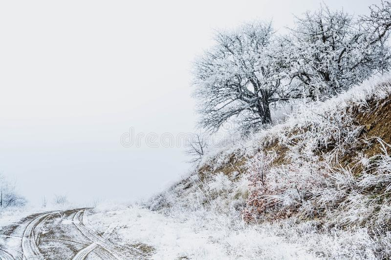 Winter forest. In the snow, background, christmas, tree, landscape, nature, pine, scene, cold, white, blue, frost, snowy, beauty, season, january, year, sky royalty free stock image