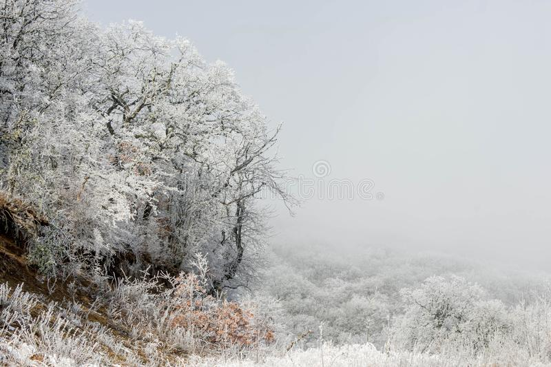 Winter forest. In the snow, background, christmas, tree, landscape, nature, pine, scene, cold, white, blue, frost, snowy, beauty, season, january, year, sky stock photography