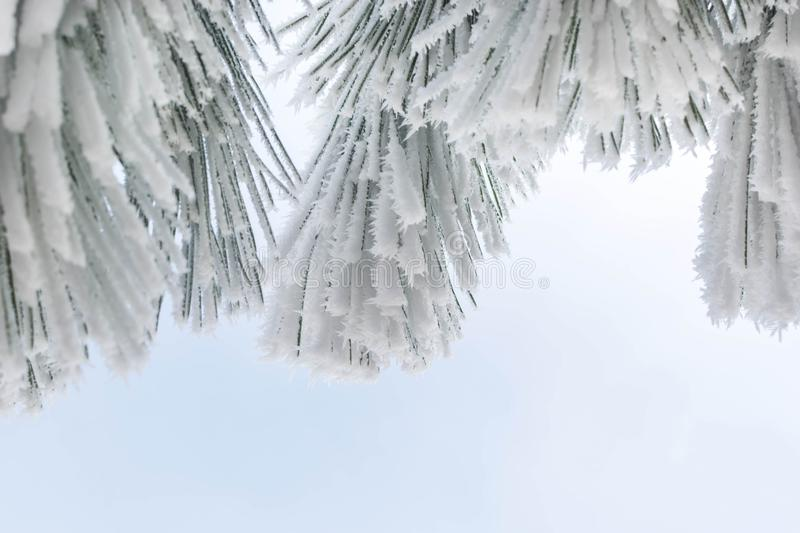 Winter forest. In the snow, background, christmas, tree, landscape, nature, pine, scene, cold, white, blue, frost, snowy, beauty, season, january, year, sky stock photos