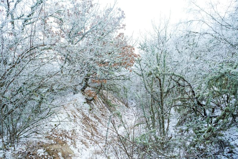 Winter forest. Winter ice in the snow, forest, landscape, background, nature, white, tree, cold, scene, frost, beautiful, season, outdoor, branch, day, mountain royalty free stock photography
