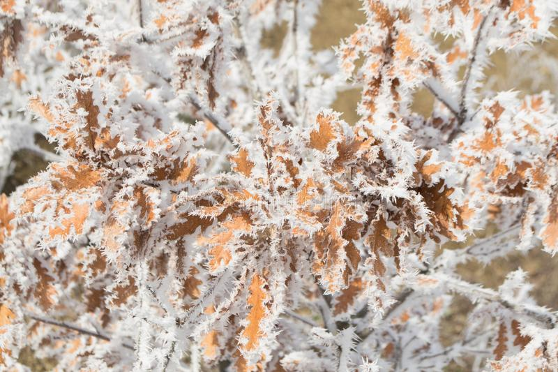 Winter forest. Winter ice in the snow, forest, landscape, background, nature, white, tree, cold, scene, frost, beautiful, season, outdoor, branch, day, mountain stock photography