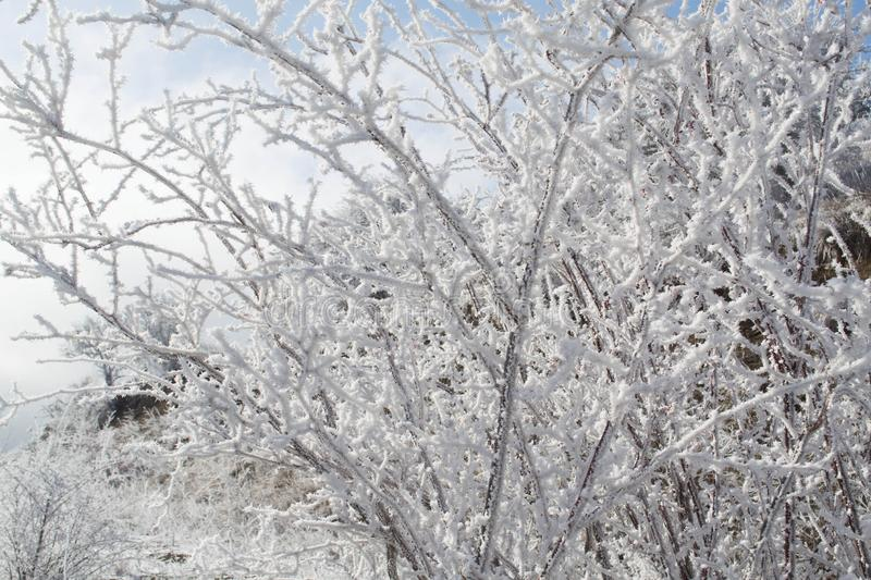 Winter forest. Winter ice in the snow, forest, landscape, background, nature, white, tree, cold, scene, frost, beautiful, season, outdoor, branch, day, mountain stock images