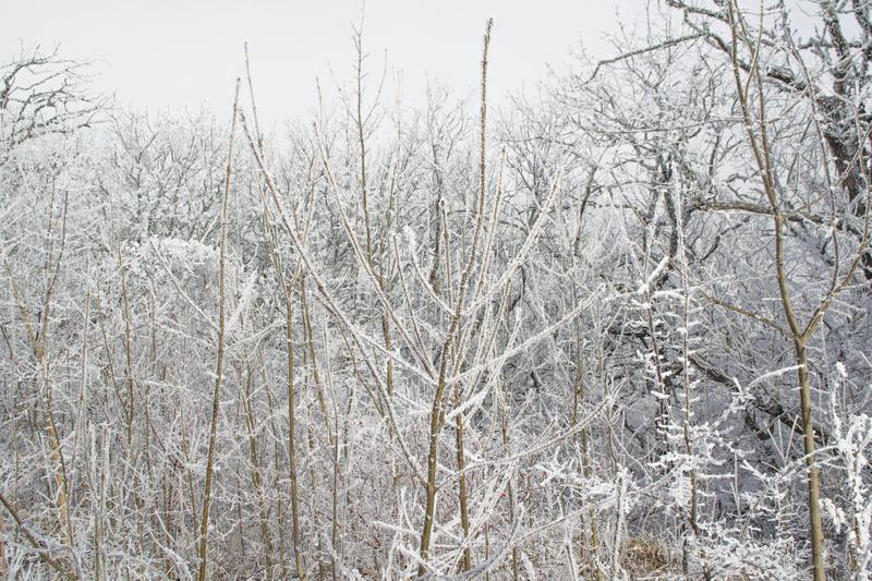 Winter forest. Winter ice in the snow, forest, landscape, background, nature, white, tree, cold, scene, frost, beautiful, season, outdoor, branch, day, mountain stock image