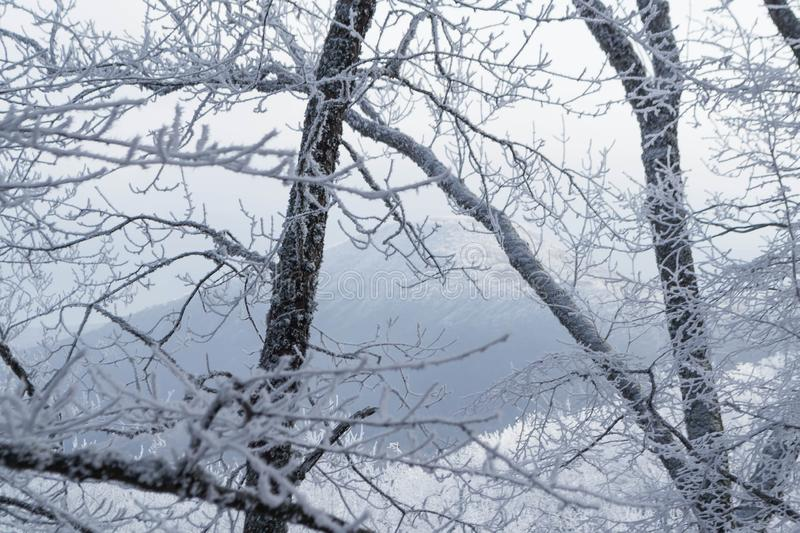 Winter forest. Winter ice in the snow, forest, landscape, background, nature, white, tree, cold, scene, frost, beautiful, season, outdoor, branch, day, mountain stock photo